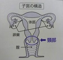 子宮の構造