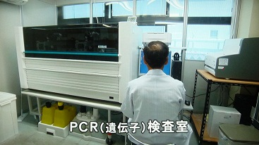 PCR遺伝子検査